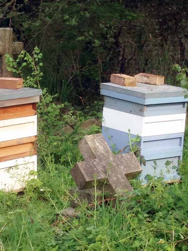 bee hives amongst gravestones in a cemetery