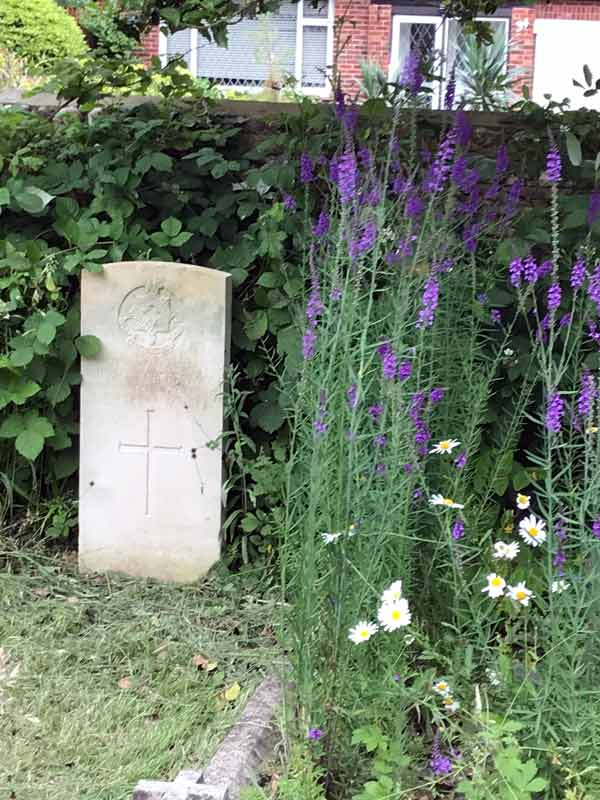 a commonewealth war grave with purple tall flowers to its right