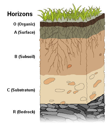 The simplest soils have four horizons.