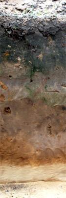 A photograph that shows a soil cross section, revealing horizons